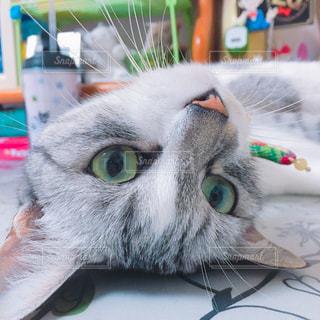猫の写真・画像素材[286037]