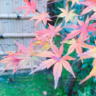 秋の写真・画像素材[293157]