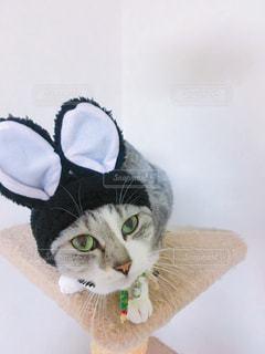 猫の写真・画像素材[298561]