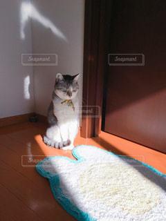 猫の写真・画像素材[302231]