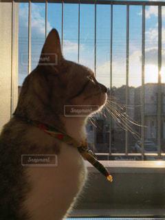 猫の写真・画像素材[333714]