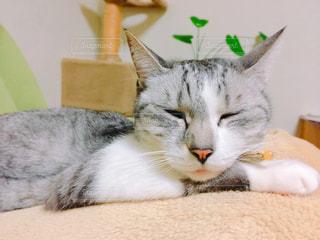 猫の写真・画像素材[347864]