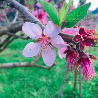 春の写真・画像素材[432858]
