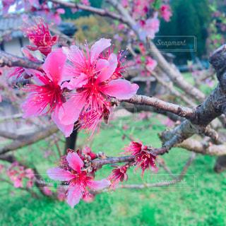 春の写真・画像素材[432859]