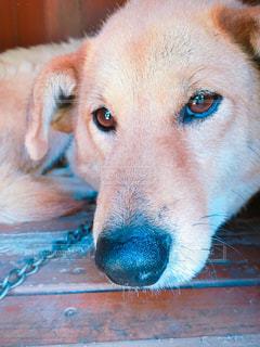 犬の写真・画像素材[455997]
