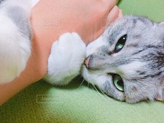 猫の写真・画像素材[535946]
