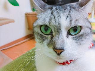 猫の写真・画像素材[571986]