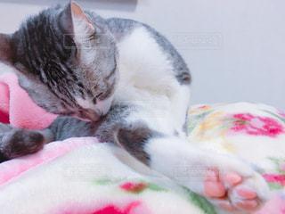 No.571987 猫