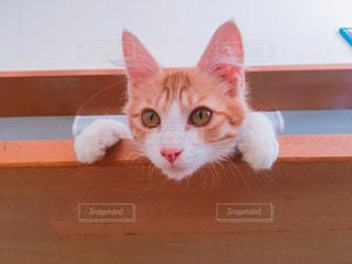 猫の写真・画像素材[673452]