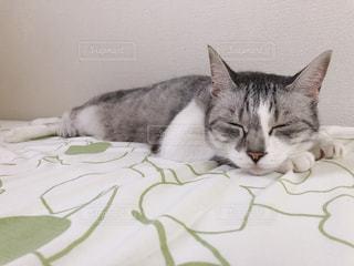 ベッドに横たわる猫の写真・画像素材[2393802]