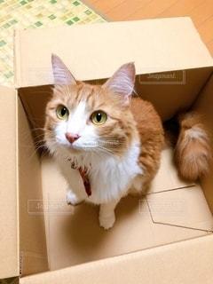 猫の写真・画像素材[2472171]