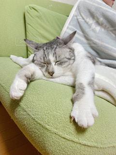 緑のソファーに横たわっている猫の写真・画像素材[3005520]