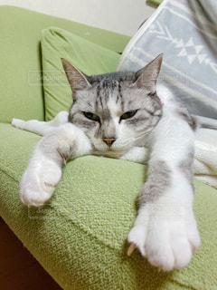 ソファーに横たわる猫の写真・画像素材[3005521]