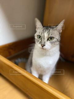 木のテーブルの上に座っている猫の写真・画像素材[3758885]