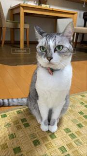 猫の写真・画像素材[3758882]