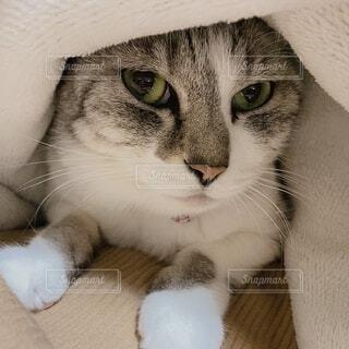 帽子をかぶった猫の写真・画像素材[4015888]