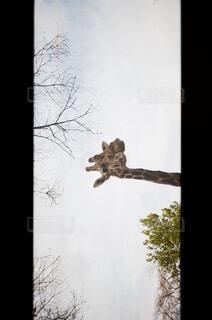 空を飛んでいる鳥の写真・画像素材[4231006]