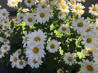 日常×花の写真・画像素材[4232793]