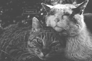 猫on猫の写真・画像素材[4245227]