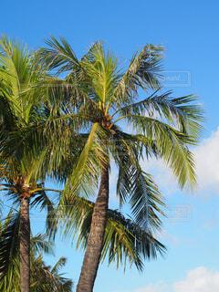ヤシの木のあるビーチの写真・画像素材[4272276]