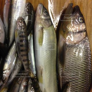 No.182796 魚