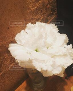 白のトルコ桔梗の写真・画像素材[4237960]