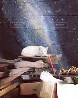 カウンターに座っている猫 - No.707787