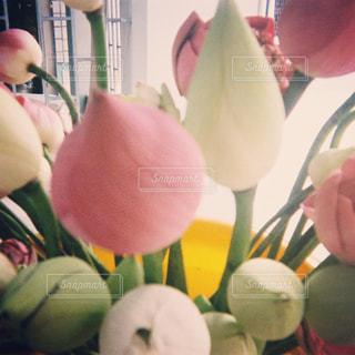 近くの花のアップ - No.707790
