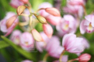 近くの花のアップの写真・画像素材[1844188]