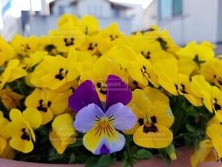 花のクローズアップの写真・画像素材[4279444]
