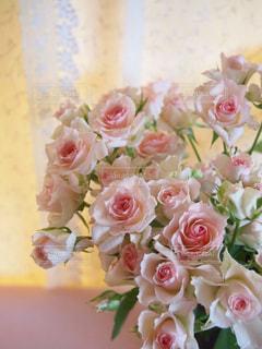 ロマンチックなピンクの薔薇の写真・画像素材[198595]