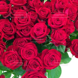 赤薔薇の花束の写真・画像素材[1005578]
