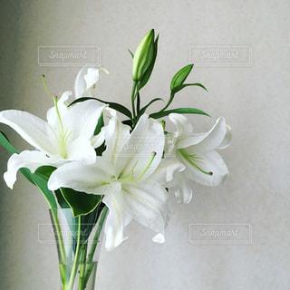 白ユリと花瓶の写真・画像素材[1005584]