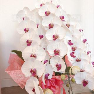 胡蝶蘭でお祝いをの写真・画像素材[4273281]