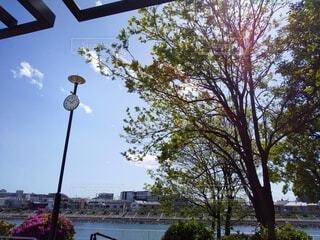 運河の見える公園の時計と新緑の写真・画像素材[4345113]