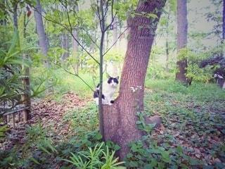 切株の上でこちらを見る野良猫の写真・画像素材[4385298]