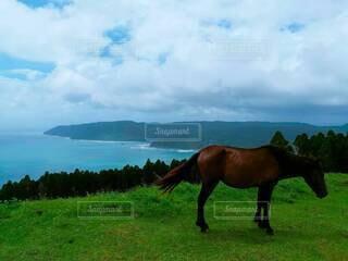 海と馬の写真・画像素材[4258989]