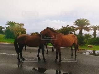 馬のコミュニケーションの写真・画像素材[4259025]