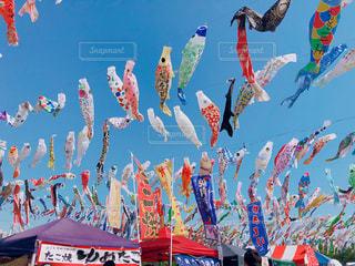 こいのぼり祭りの写真・画像素材[2692551]