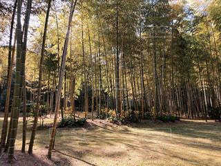 森の中の木の写真・画像素材[2799949]
