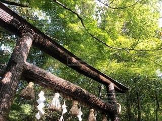 木漏れ日と鳥居の写真・画像素材[3656038]