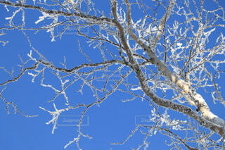 寒い冬の1日の写真・画像素材[4043842]
