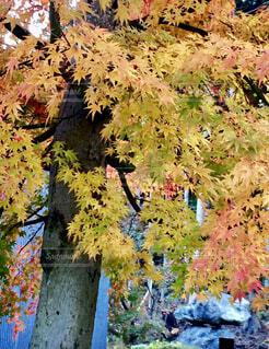 Autumnの写真・画像素材[4259331]