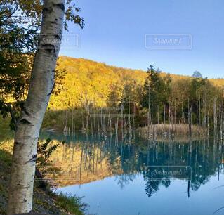 Autumn 美瑛町の風景よりの写真・画像素材[4264399]