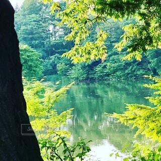 夏色の風景の写真・画像素材[4265040]