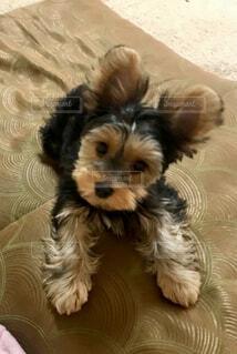 愛犬ルークの写真・画像素材[4407164]