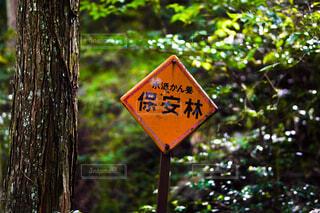 森林の中の一枚の写真・画像素材[4258826]
