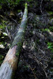 森の中の倒木の写真・画像素材[4258832]
