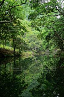 静かな川に映る新緑の写真・画像素材[4397366]