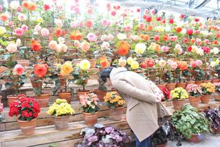 花の写真・画像素材[341885]